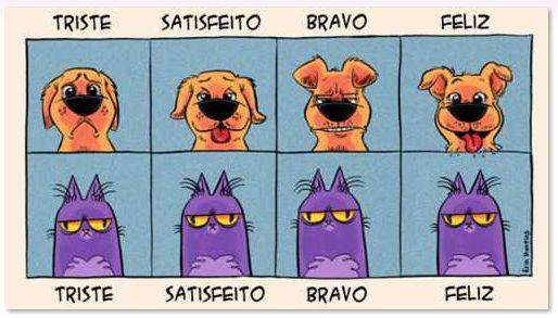 Felicidade canina X felicidade felina