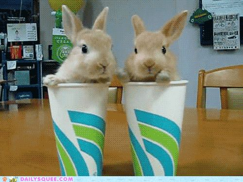 NY BANS Soda.. They will give us Bunnies Instead!