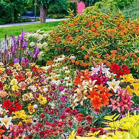 Butterfly Garden Kit 30 Perennials From Gurney S Butterfly Garden Gurneys Kit Perennials Flower Garden Design Butterfly Garden Kit Garden Kits