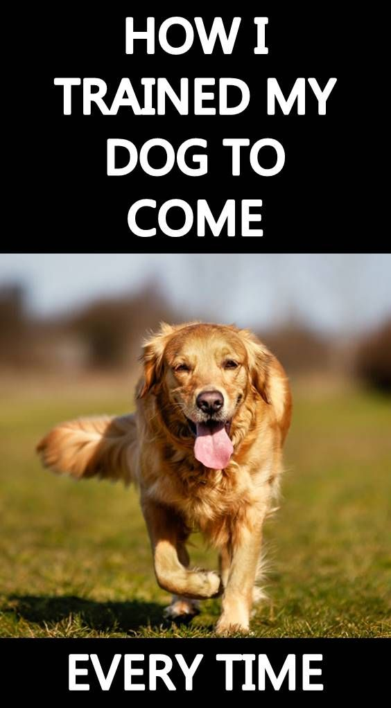 Pin By Ella On Tricks For Dogs Dogs Training Your Dog Dog Training