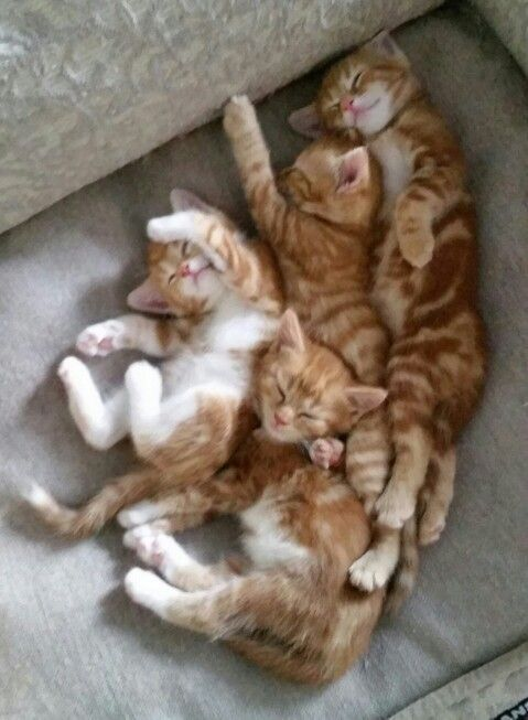 Orange Tabby Kitten Kitten Cat Cats Kitten Kittens Cute