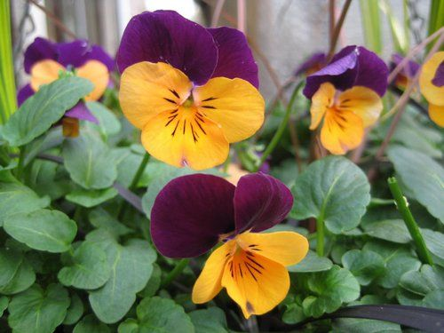 Choose Flowers For Window Boxes | www.coolgarden.me