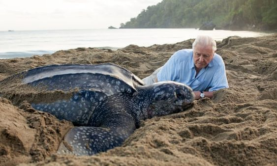 A leatherback turtle with David Attenborough in Trinidad