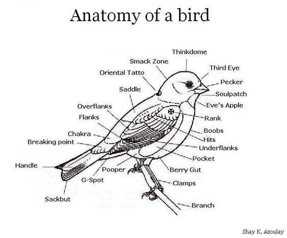 simple diagram of body organs simple diagram of bird bird activities - google search | birds | pinterest | activities, search and google