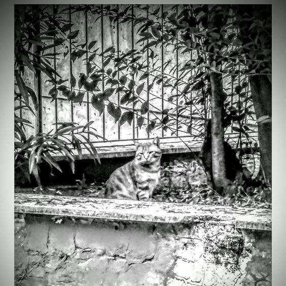 Lorenzo our #romanmouser #fb #roma #watchcat #gatto