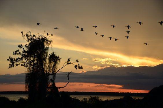 Lake Griffin Sunset