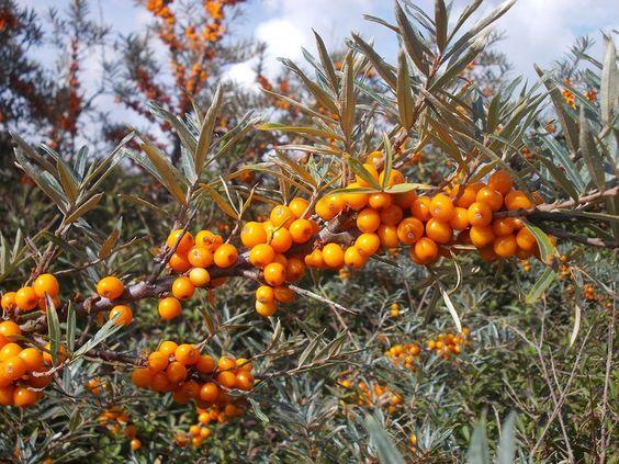 Wildfrüchte im Spätsommer und Herbst Teil 2
