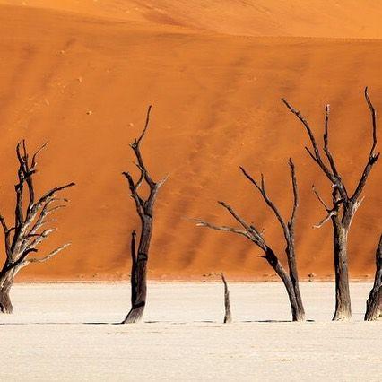 #DESERT #TREES by Felix Salomon #Photocircle #photoart #ff# followfriday #happyweekend #happyfriday #Namibia #Africa #camelthorn #Deadvlei #Namibdesert #Tsauchab #river #sanddunes #salsola #black #orange #red  #dry #landscapephotography #Sossusvlei #travel