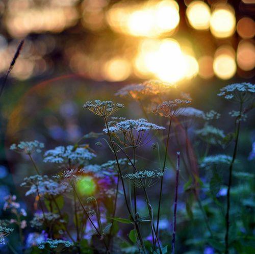 Garden's light