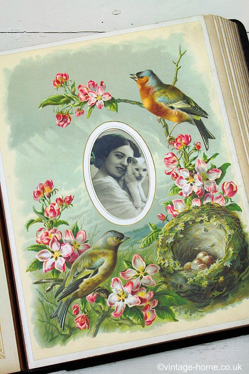 Vintage Home Shop - Victorian Full Colour Chromoliths Birds Album - Watching over the eggs in the nest in April - www.vintage-home.co.uk