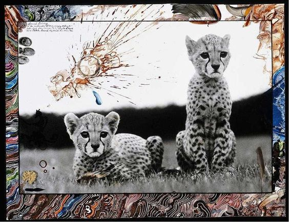 Peter Beard Orphaned Cheetah Cubs Mweiga National Park Kenya for The End of the Game 1968 #fineartadvisory #peterbeard #inspiration #threedimensionalexperience #photography #fineart #travelphotography
