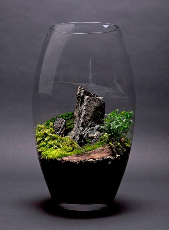 petit paysage en terrarium plantes int rieures indoor. Black Bedroom Furniture Sets. Home Design Ideas