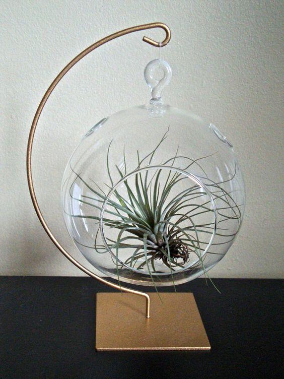 Glass globe, Terrarium and Air plant terrarium