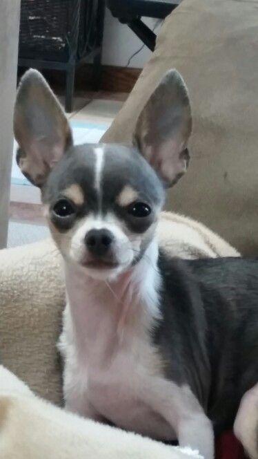 Kiki♡Darling dog!