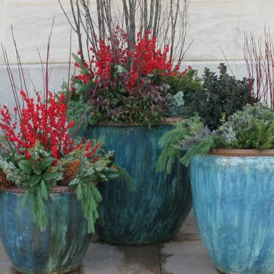 Winter Container Garden Gallery: Winter Container Gardens - U.S. Botanic Gardens