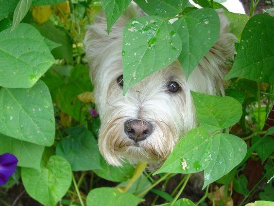 The Terrier Club - Photo Detail: