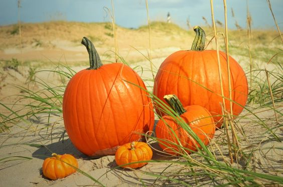 Punkins at the beach!!  <3