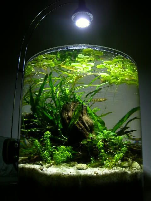 Shrimp Jar Aquarium Google Search Aquascape