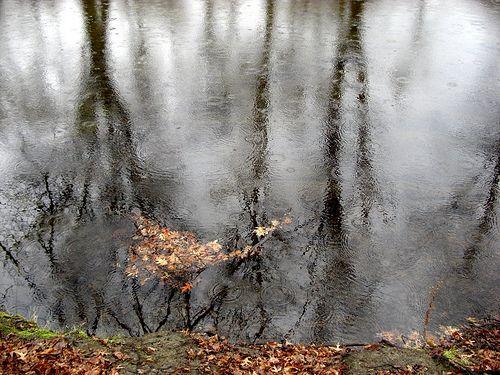 Rainy River.  November 30, 2009. Northampton, Massachusetts