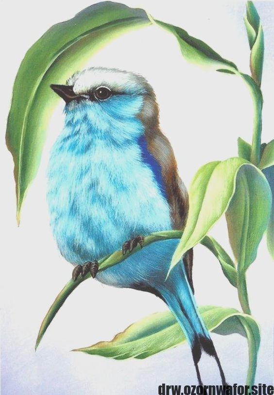 New Free of Charge color pencil drawing Tips  Put in writing painting will be single, for example it provides a solo hued, however with several brightness values. Wh #Charge #color #drawing #Free #pencil #Tips