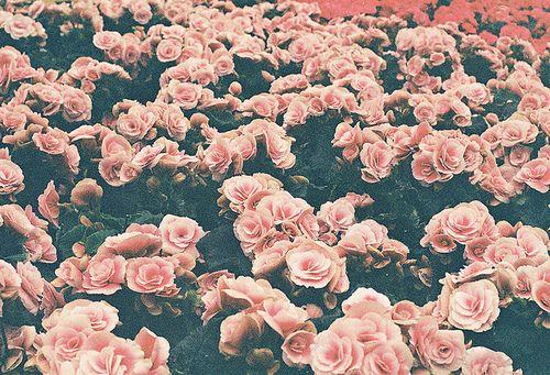 Pastel Flowers Tumblr Roses