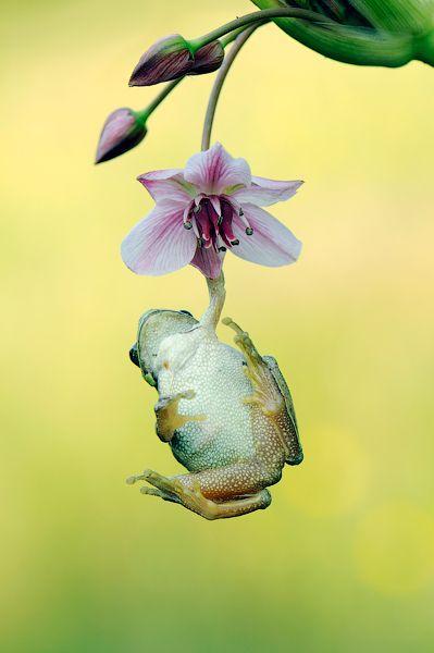 frogs like flowers too.