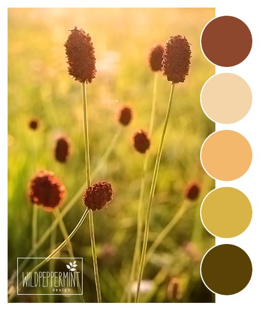 Die Farben des Spätsommers, Farben Spätsommer, warme Farben, gedeckte Farbpalette, Brauntöne, © wildpepeprmint-design.de