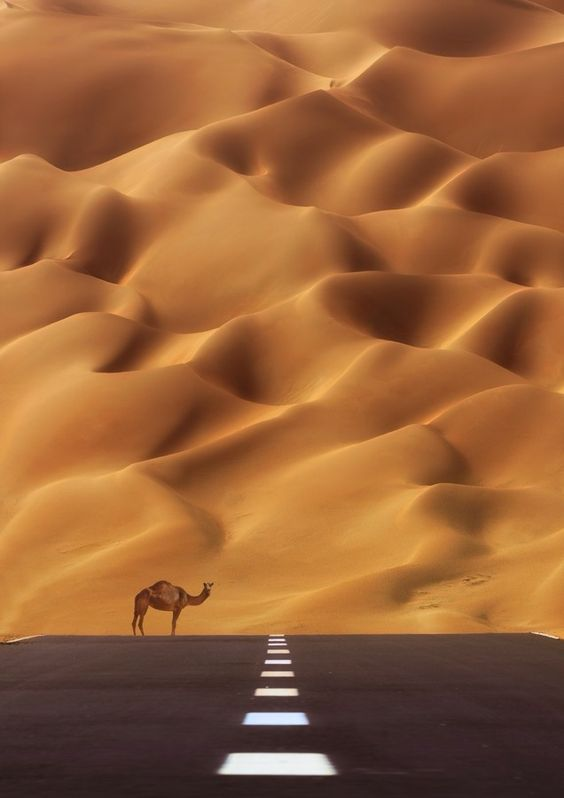 ~~THE ROAD TO THE Empty Quarter ~ lone camel in the desert, Kuwait, UAE by bohindi abdulla~~