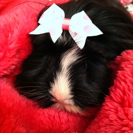 FiFi,my niece Laura's precious baby! I love her too, she is the cutest lil piggy EVER!!!!