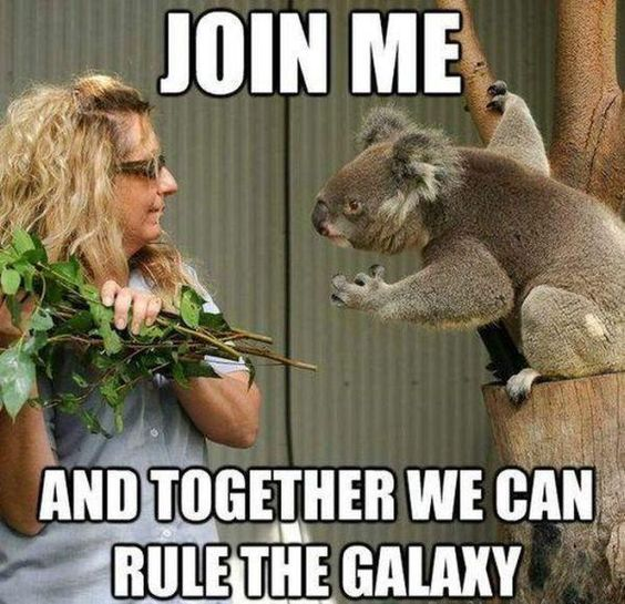 i would so say yes koala what I mean?/