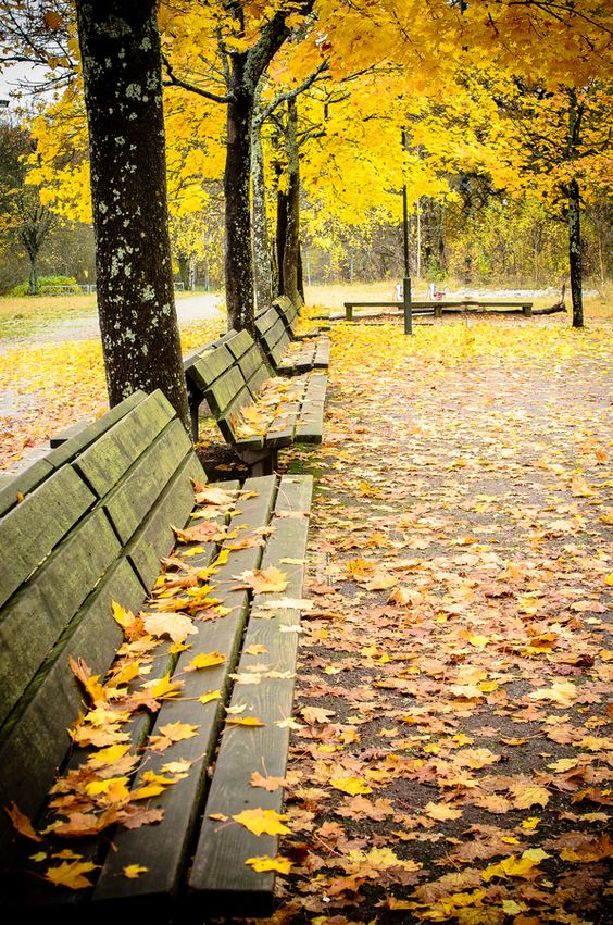 Colorful Fall Leaves on Wooden Park Benches