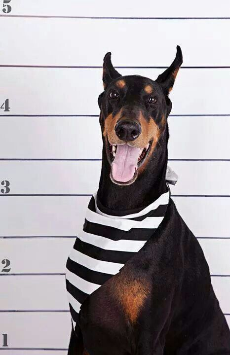 Doberman - i guess im in prison now, however my enemy weren't as lucky 8)