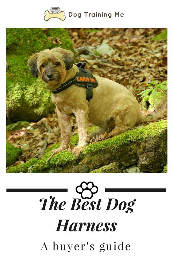 How To Choose The Best Dog Harness Dogs Dog Training Dog Harness