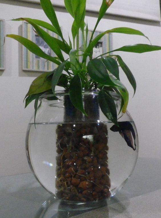 Betta fish aquarium with water plants just add some water for Bottled water for betta fish