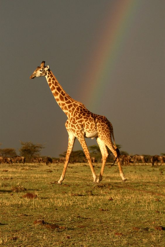 At the end of a rain storm on the Mara.