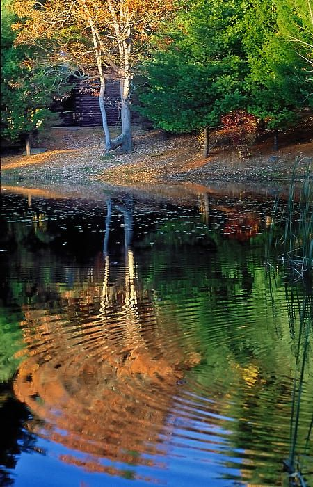 ✮ Pond Reflections