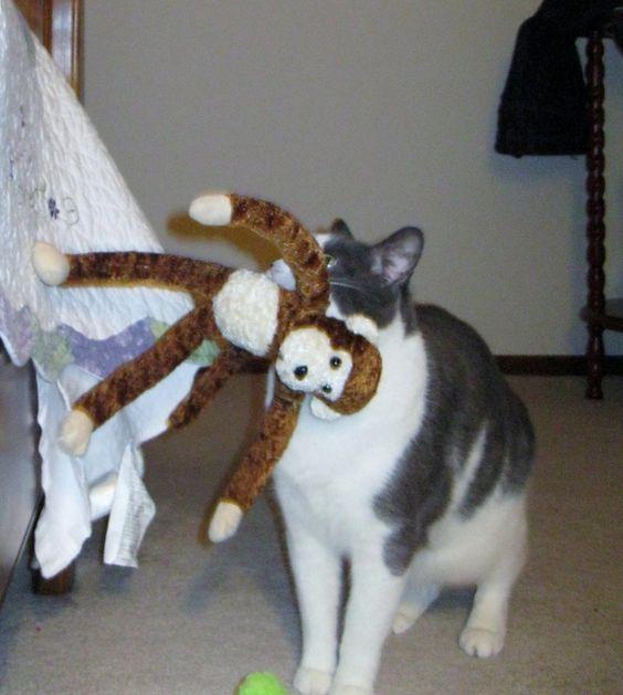Simon and his monkey