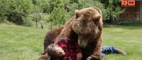 Grizzlybeer als huisdier