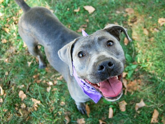 LOLA - A1087047 - - Manhattan  Please Share:TO BE DESTROYED 09/03/16**THIS…