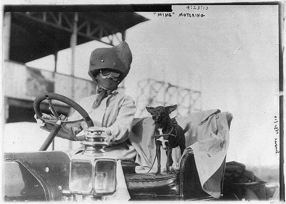 Dogs - motoring