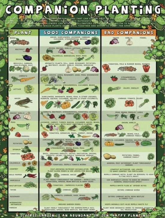 Companion Planting Chart Lots Of Great Info Video Tutorial | Companion  Planting Chart, Planting And Chart