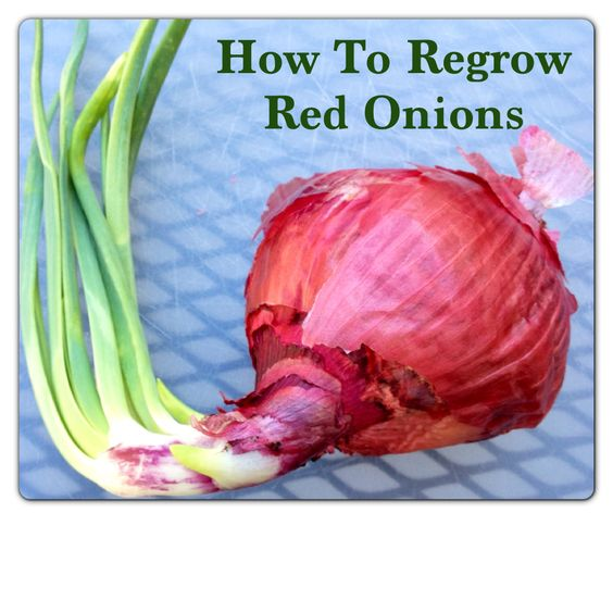 how to grow onions Your one stop resource for vegetable, fruit, herb and plant care in the garden and allotment.