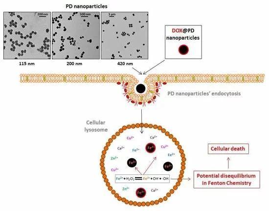 Cancers | Special Issue : Cancer Nanomedicine