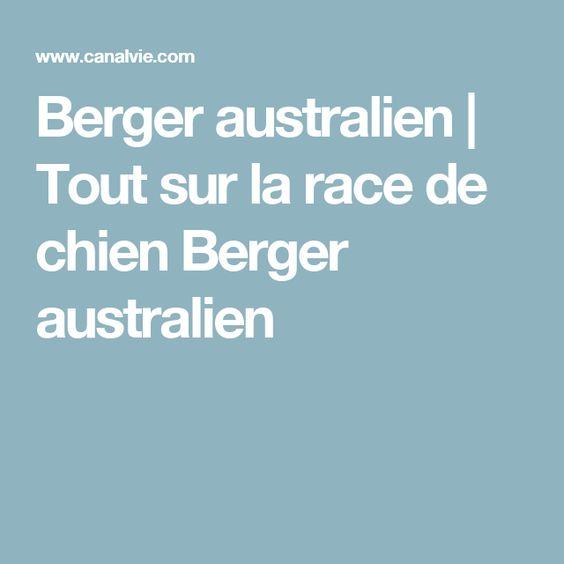 Berger australien   Tout sur la race de chien Berger australien
