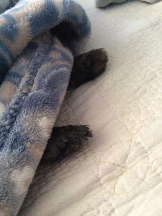 Hammie paws.