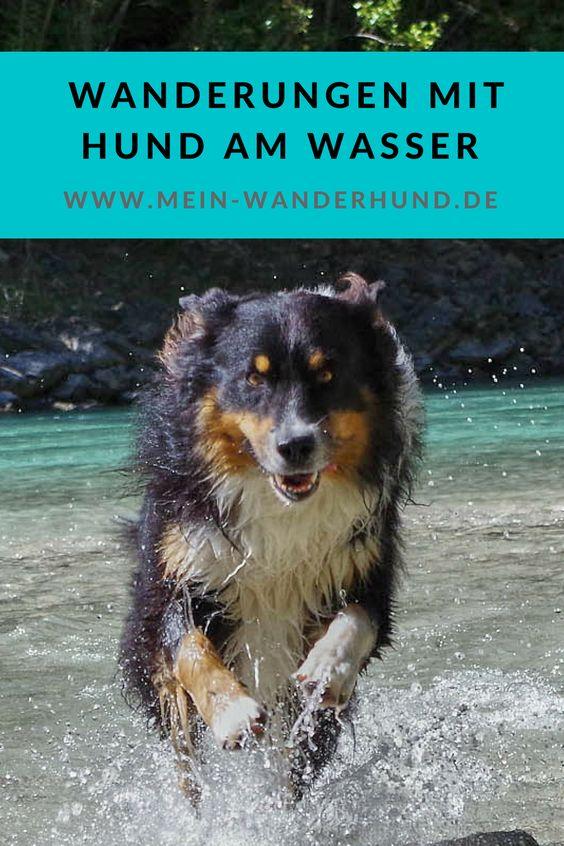 Tolle Touren Fur Wandern Mit Hund Am Wasser Hunde Hund Reisen Hund Unterwegs