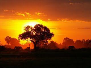Dawn in the Safari
