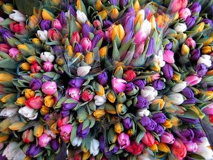 You can't have spring without TULIPS!!!
