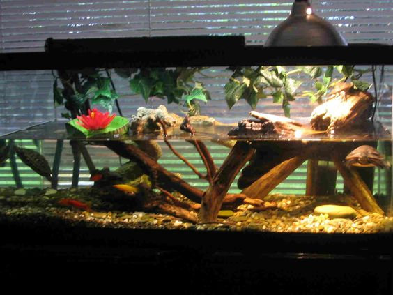 Amazon Water Turtles Tanks Turtle Terrarium Ideas Yugi