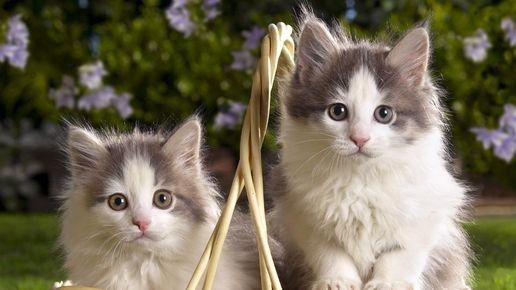 world kittens